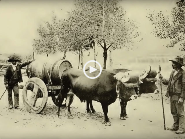 Portugal 1907 'Dulce Pontes'